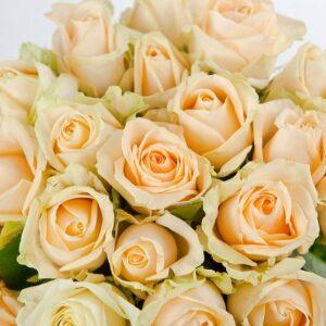 Роза кремовая Пич Аваланж букет