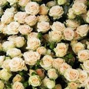 Роза кремовая спрей Яна букет