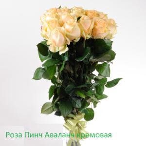 Розы кремовые Пич Аваланж букет 21 шт 70 см