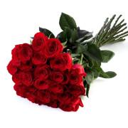 Роза красная Фридом букет