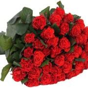 Роза алая Эль Торо букет 21 шт 50 см
