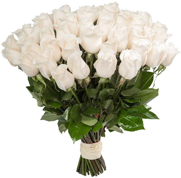 Роза белая Анастасия