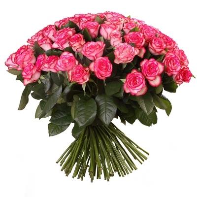 Роза бело розовая Джумилия букет