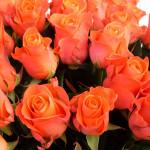 Роза оранжевая Вау букет