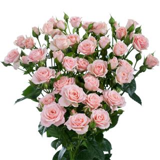Роза спрей Лидия букет
