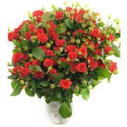 Роза спрей Мирабель букет