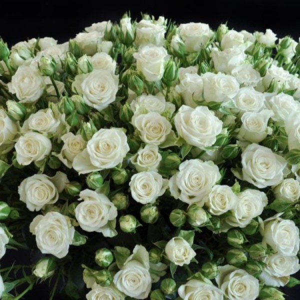 Роза белая спрей Сноуфлейк букет