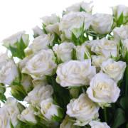Роза белая спрей Сноуфлейк