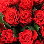 Роза алая Эльторо букет