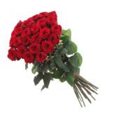 Роза красная Фридом
