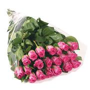 Роза розовая Аква
