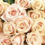 Роза кремовая Талея букет