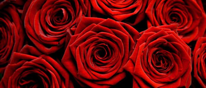Розы Украина