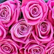Роза розовая Аква букет