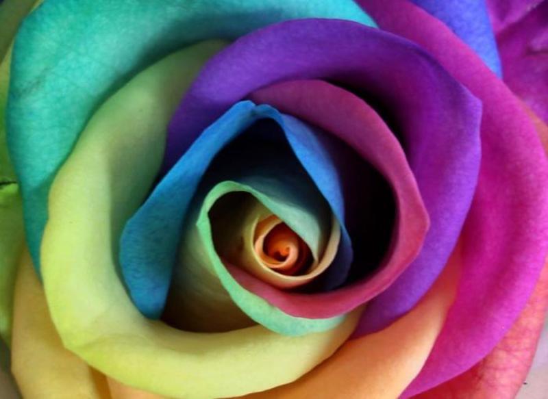 Цветы Запорожье