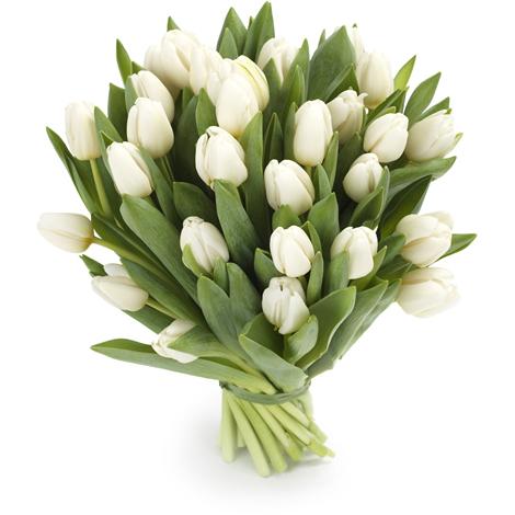 Тюльпаны белые букет 19 шт