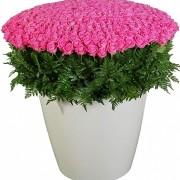 Букет 1001 роза розовая