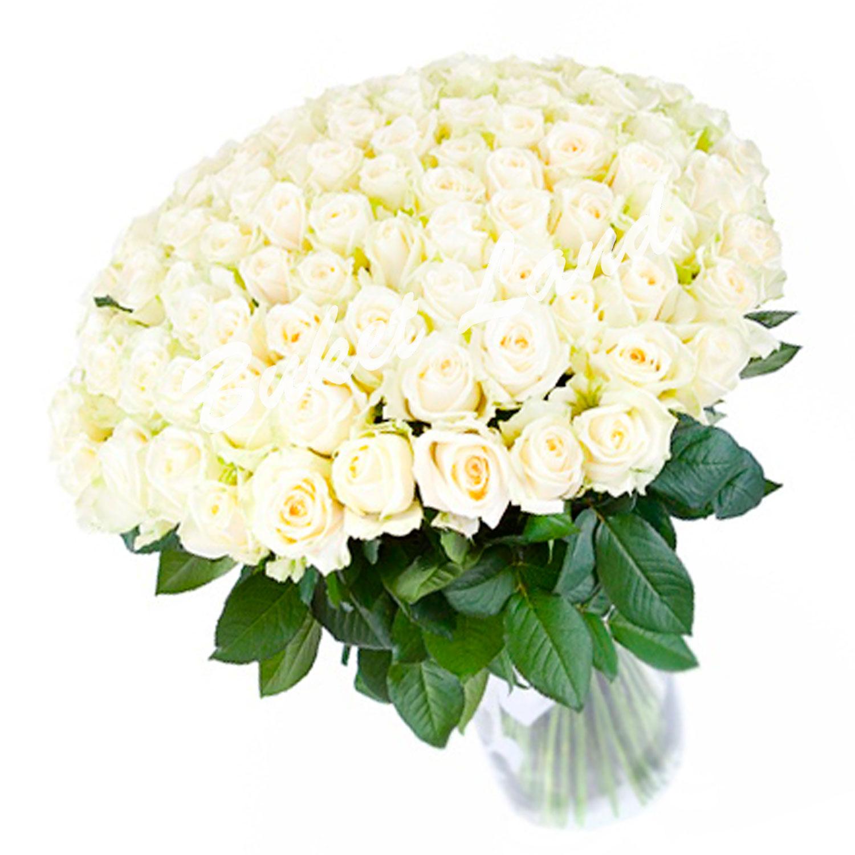 Букет 101 белая роза Аваланж 60 см