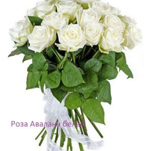 Букет роза Аваланж 21 шт 40 см