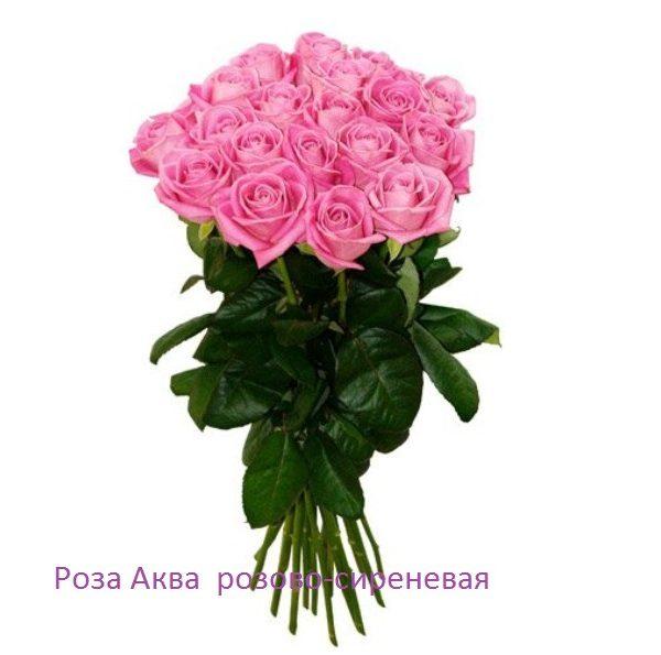 Роза 21 шт Аква