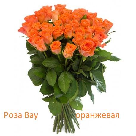 Роза 21 шт Вау