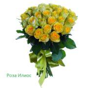 Роза 21 шт Илиос