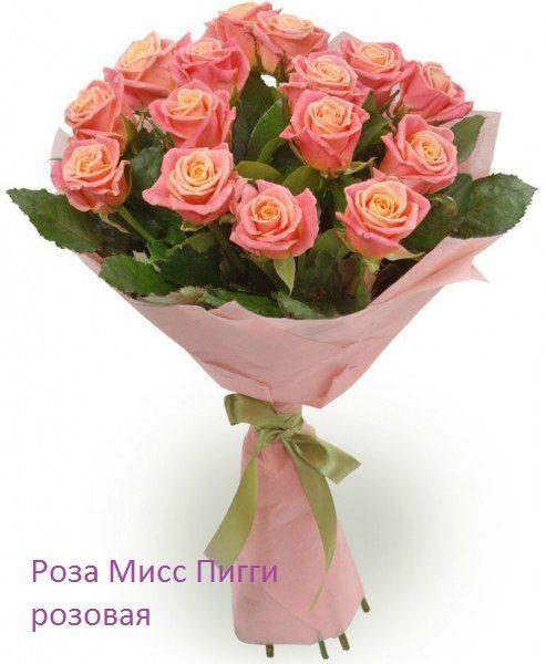 Роза 21 шт Мисс Пигги