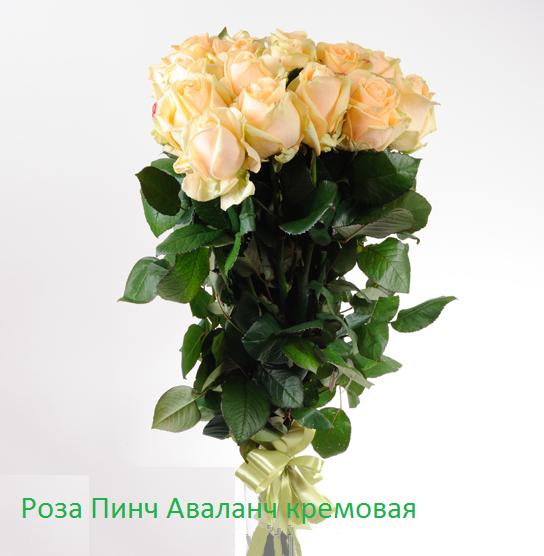 Роза 21 шт Пинч Аваланч