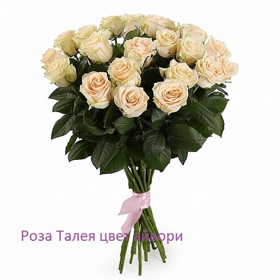 Роза 21 шт Талея