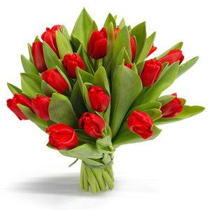 Тюльпаны красные букет 19 шт
