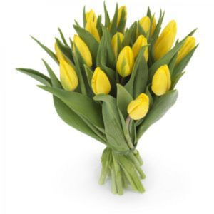 Тюльпаны желтые букет 15 шт