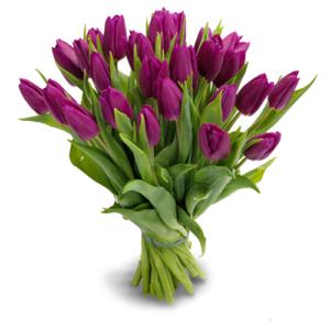 Тюльпаны фиолетовые букет 25 шт