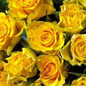 Роза желтая Сфинкс букет 21 шт 50 см
