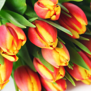 Тюльпаны красно-желтые букет 25 шт