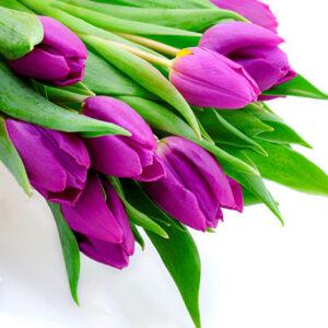 Тюльпаны фиолетовых букет 15 шт